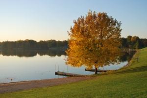 1369356_fall_tree_by_lake.jpg