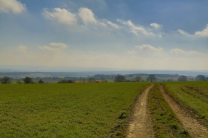 grass-landscape-with-road-1440659-m.jpg