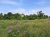 summertime-wild-flower-meadow-1354218-s.jpg